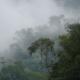 bosque-niebla