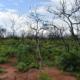 Rebrote de arboles y arbustos